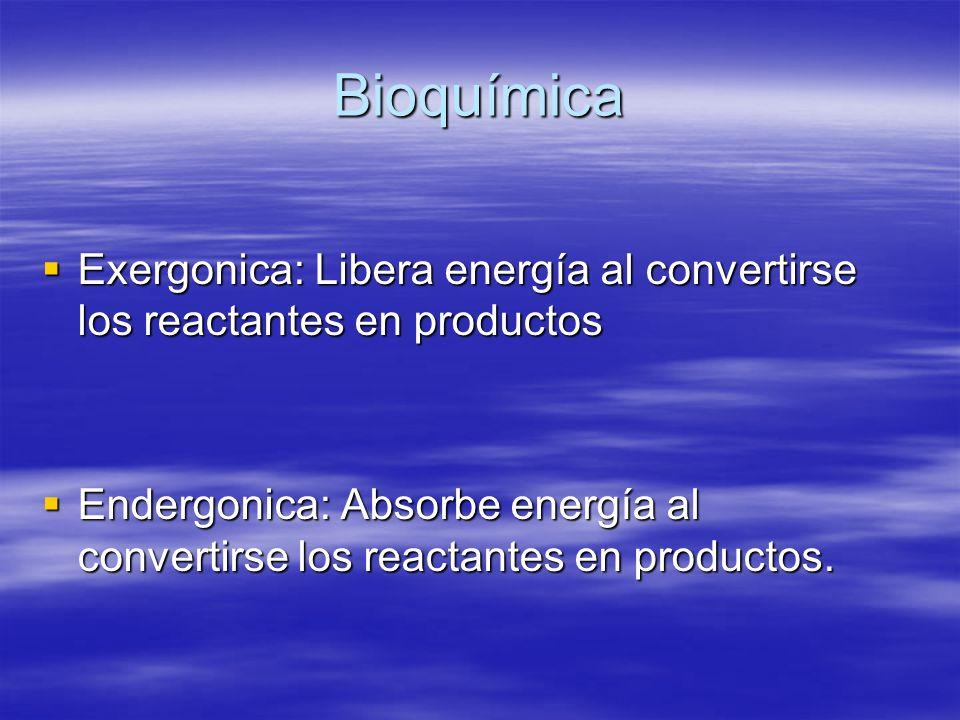 Bioquímica Exergonica: Libera energía al convertirse los reactantes en productos Exergonica: Libera energía al convertirse los reactantes en productos