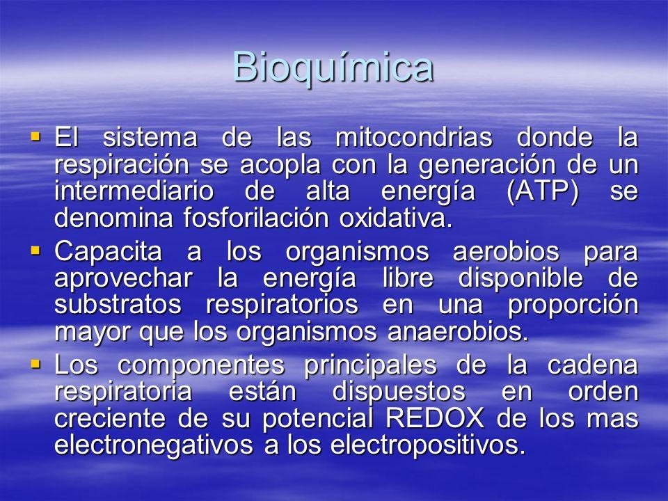 Bioquímica El sistema de las mitocondrias donde la respiración se acopla con la generación de un intermediario de alta energía (ATP) se denomina fosfo