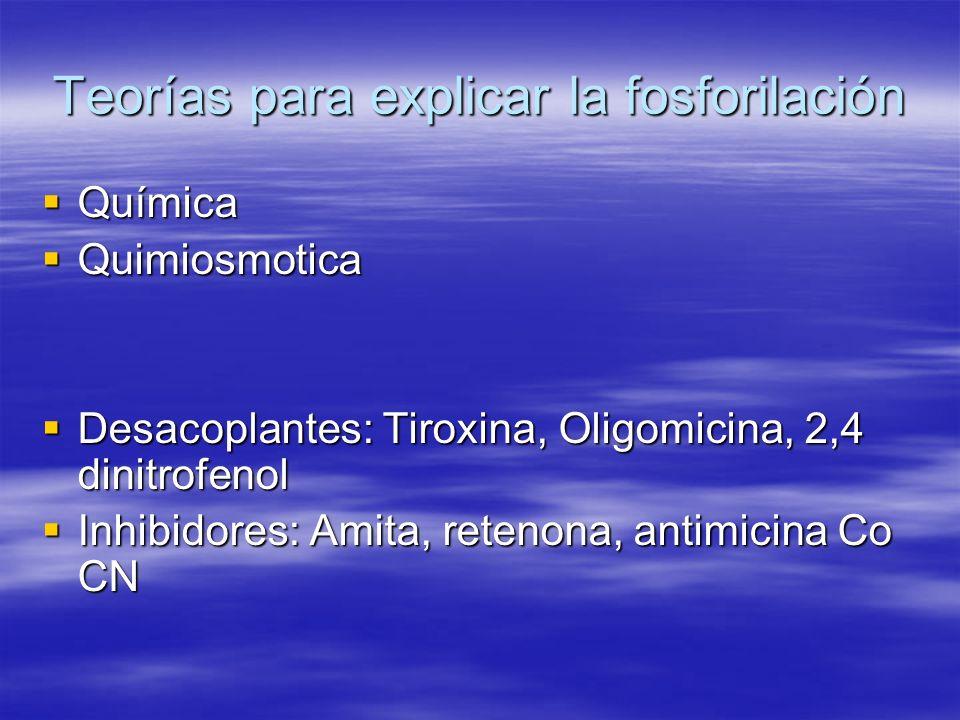 Teorías para explicar la fosforilación Química Química Quimiosmotica Quimiosmotica Desacoplantes: Tiroxina, Oligomicina, 2,4 dinitrofenol Desacoplante