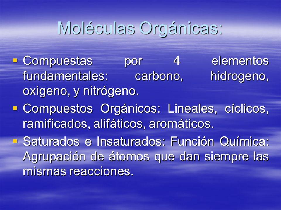 Moléculas Orgánicas: Compuestas por 4 elementos fundamentales: carbono, hidrogeno, oxigeno, y nitrógeno. Compuestas por 4 elementos fundamentales: car