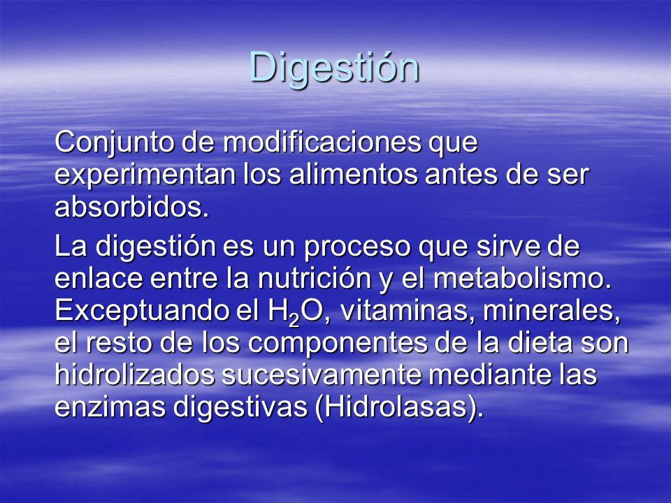 Digestión Conjunto de modificaciones que experimentan los alimentos antes de ser absorbidos. La digestión es un proceso que sirve de enlace entre la n