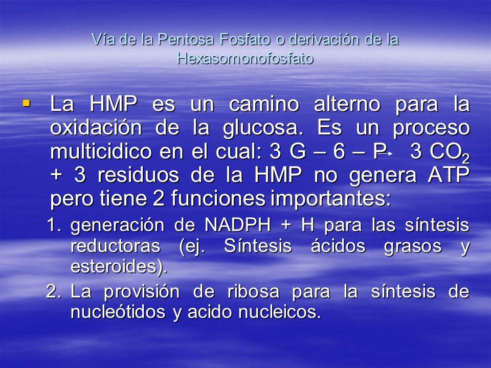 Vía de la Pentosa Fosfato o derivación de la Hexasomonofosfato La HMP es un camino alterno para la oxidación de la glucosa. Es un proceso multicidico