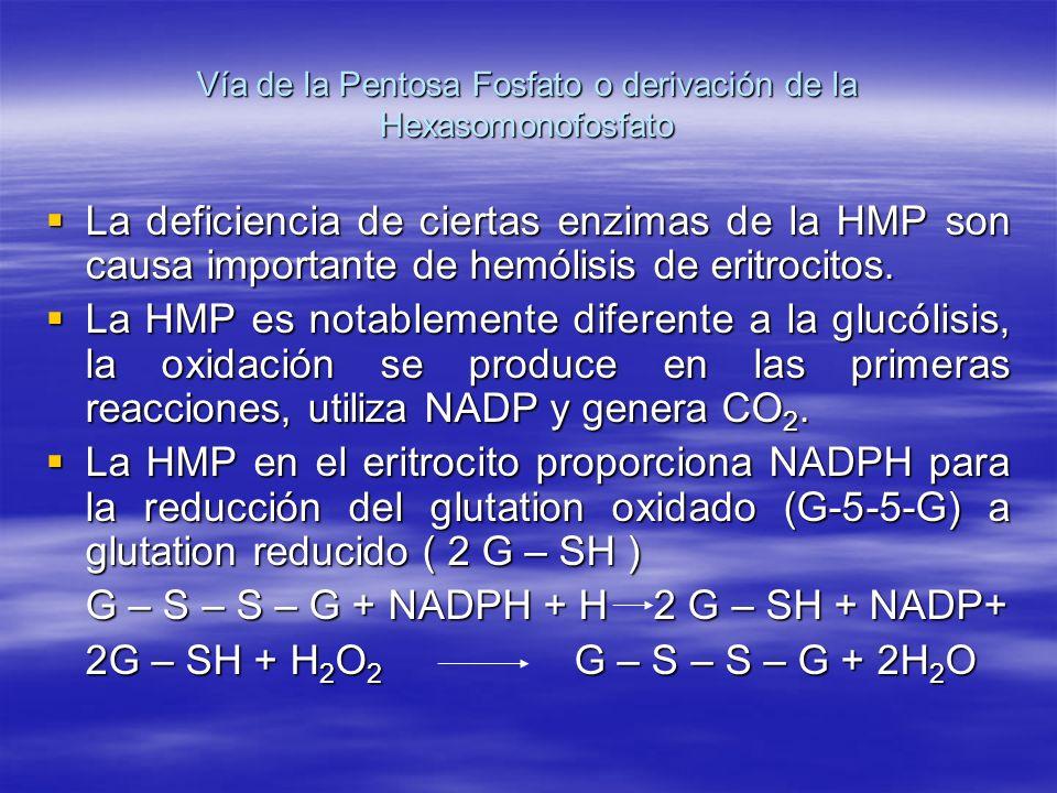 Vía de la Pentosa Fosfato o derivación de la Hexasomonofosfato La deficiencia de ciertas enzimas de la HMP son causa importante de hemólisis de eritro