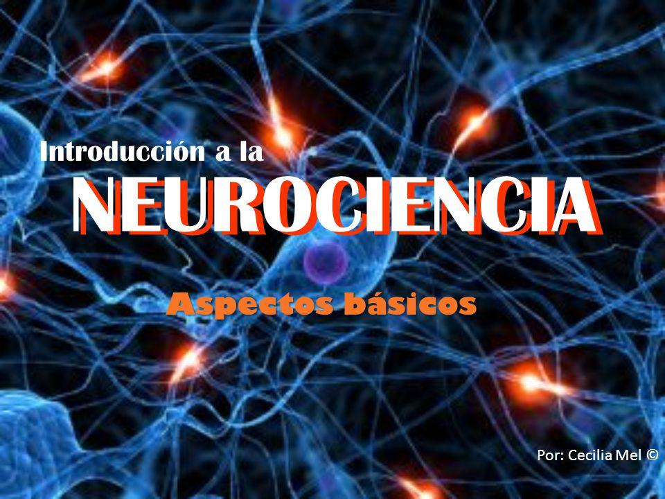 NEUROCIENCIA Aspectos básicos Por: Cecilia Mel © NEUROCIENCIA Introducción a la