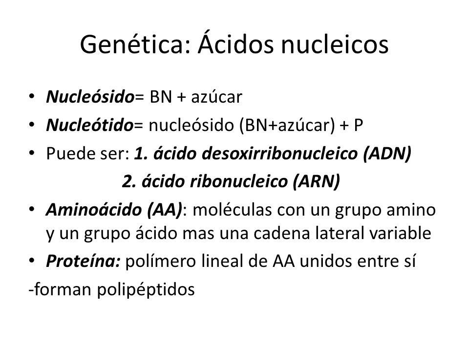 Genética: Ácidos nucleicos Nucleósido= BN + azúcar Nucleótido= nucleósido (BN+azúcar) + P Puede ser: 1. ácido desoxirribonucleico (ADN) 2. ácido ribon