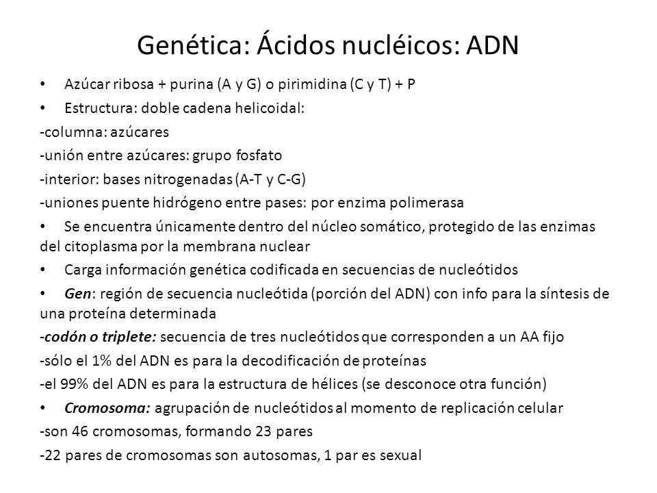 Genética: Ácidos nucléicos: ADN Azúcar ribosa + purina (A y G) o pirimidina (C y T) + P Estructura: doble cadena helicoidal: -columna: azúcares -unión