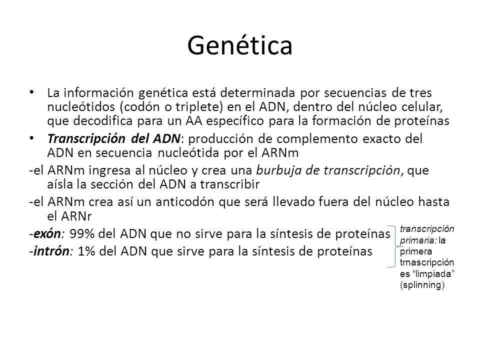 Genética La información genética está determinada por secuencias de tres nucleótidos (codón o triplete) en el ADN, dentro del núcleo celular, que deco