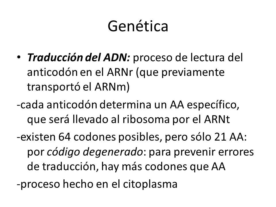 Genética Traducción del ADN: proceso de lectura del anticodón en el ARNr (que previamente transportó el ARNm) -cada anticodón determina un AA específi