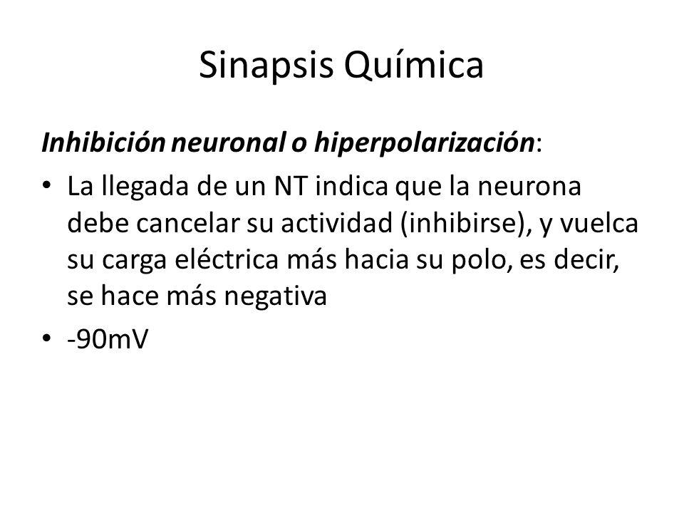 Sinapsis Química Inhibición neuronal o hiperpolarización: La llegada de un NT indica que la neurona debe cancelar su actividad (inhibirse), y vuelca s