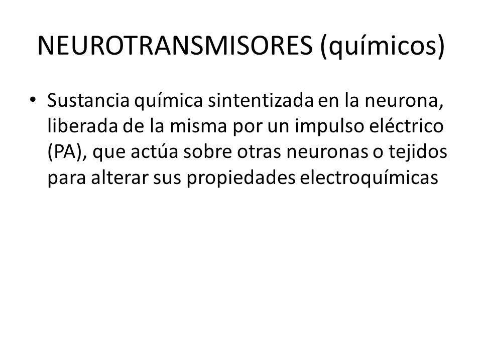 NEUROTRANSMISORES (químicos) Sustancia química sintentizada en la neurona, liberada de la misma por un impulso eléctrico (PA), que actúa sobre otras n