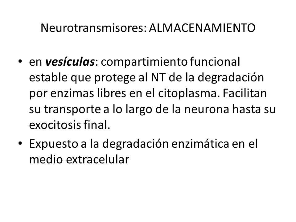 Neurotransmisores: ALMACENAMIENTO en vesículas: compartimiento funcional estable que protege al NT de la degradación por enzimas libres en el citoplas