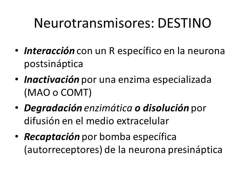 Neurotransmisores: DESTINO Interacción con un R específico en la neurona postsináptica Inactivación por una enzima especializada (MAO o COMT) Degradac