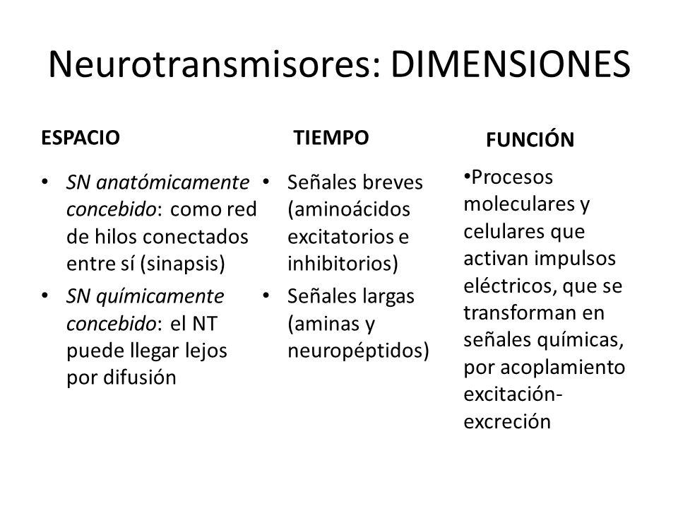 Neurotransmisores: DIMENSIONES ESPACIO SN anatómicamente concebido: como red de hilos conectados entre sí (sinapsis) SN químicamente concebido: el NT