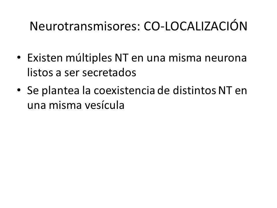 Neurotransmisores: CO-LOCALIZACIÓN Existen múltiples NT en una misma neurona listos a ser secretados Se plantea la coexistencia de distintos NT en una