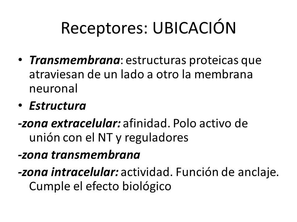 Receptores: UBICACIÓN Transmembrana: estructuras proteicas que atraviesan de un lado a otro la membrana neuronal Estructura -zona extracelular: afinid
