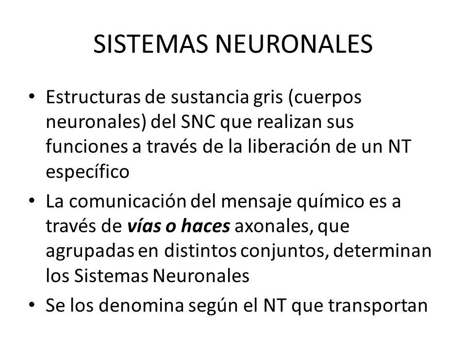 SISTEMAS NEURONALES Estructuras de sustancia gris (cuerpos neuronales) del SNC que realizan sus funciones a través de la liberación de un NT específic