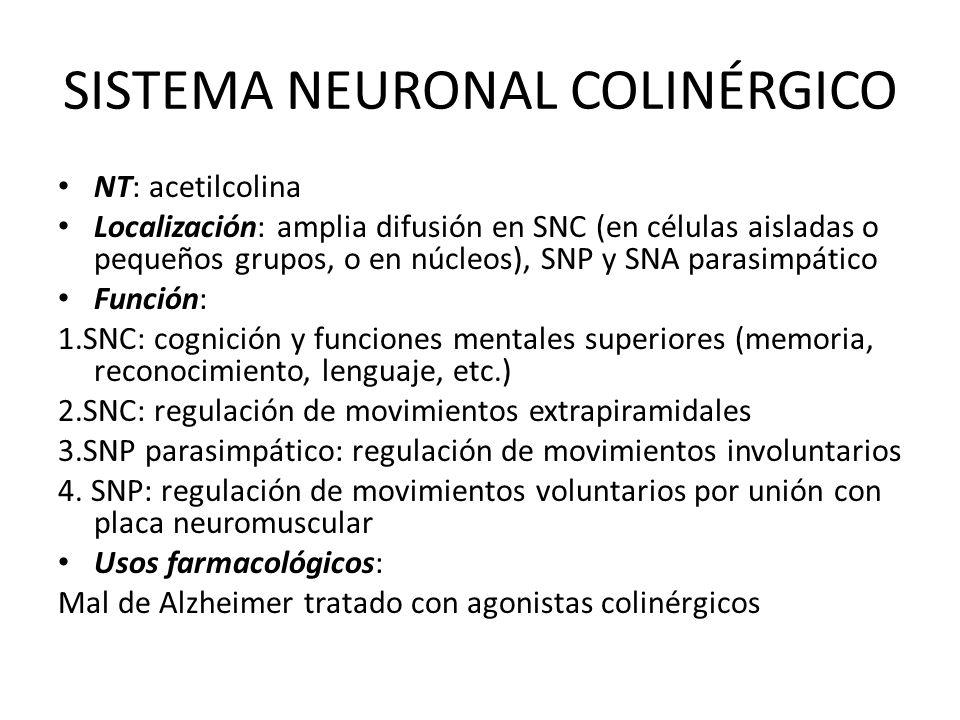 SISTEMA NEURONAL COLINÉRGICO NT: acetilcolina Localización: amplia difusión en SNC (en células aisladas o pequeños grupos, o en núcleos), SNP y SNA pa