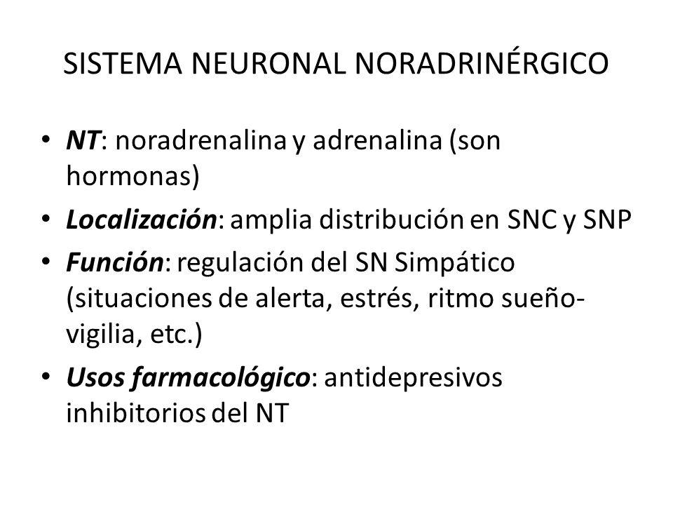 SISTEMA NEURONAL NORADRINÉRGICO NT: noradrenalina y adrenalina (son hormonas) Localización: amplia distribución en SNC y SNP Función: regulación del S