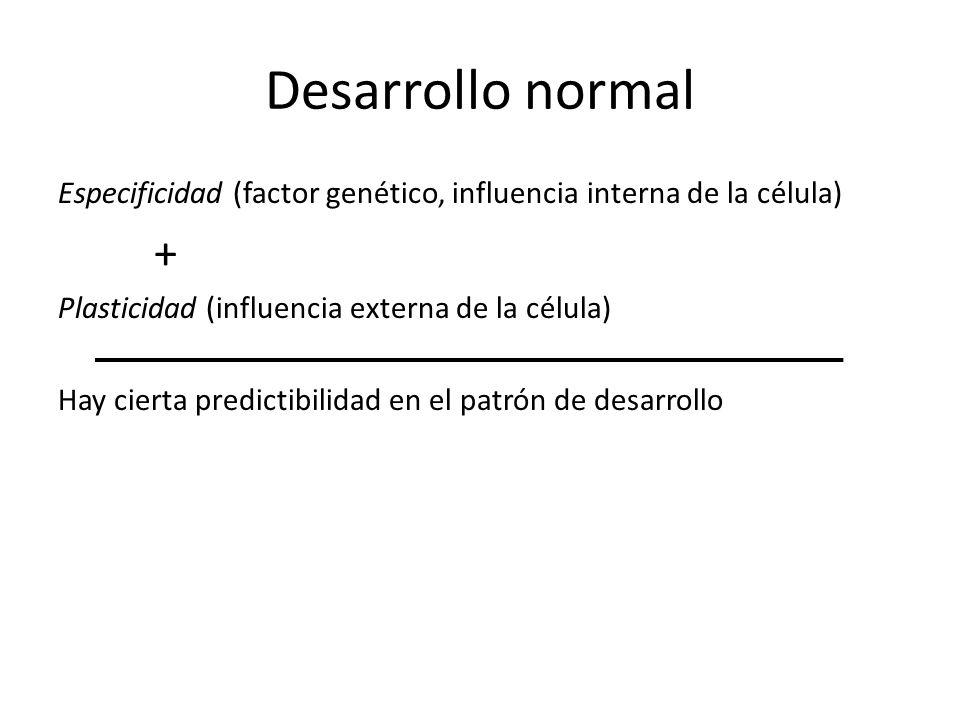 Desarrollo normal Especificidad (factor genético, influencia interna de la célula) + Plasticidad (influencia externa de la célula) Hay cierta predicti