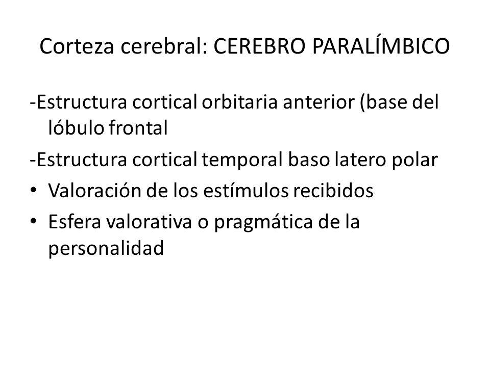 Corteza cerebral: CEREBRO PARALÍMBICO -Estructura cortical orbitaria anterior (base del lóbulo frontal -Estructura cortical temporal baso latero polar