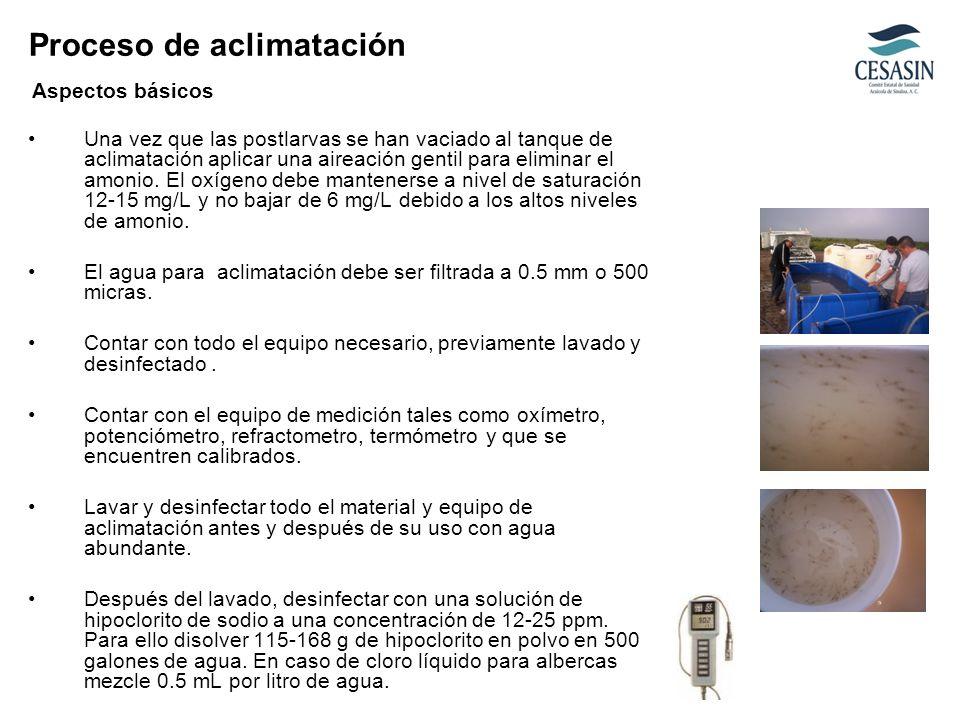 Una vez que las postlarvas se han vaciado al tanque de aclimatación aplicar una aireación gentil para eliminar el amonio. El oxígeno debe mantenerse a