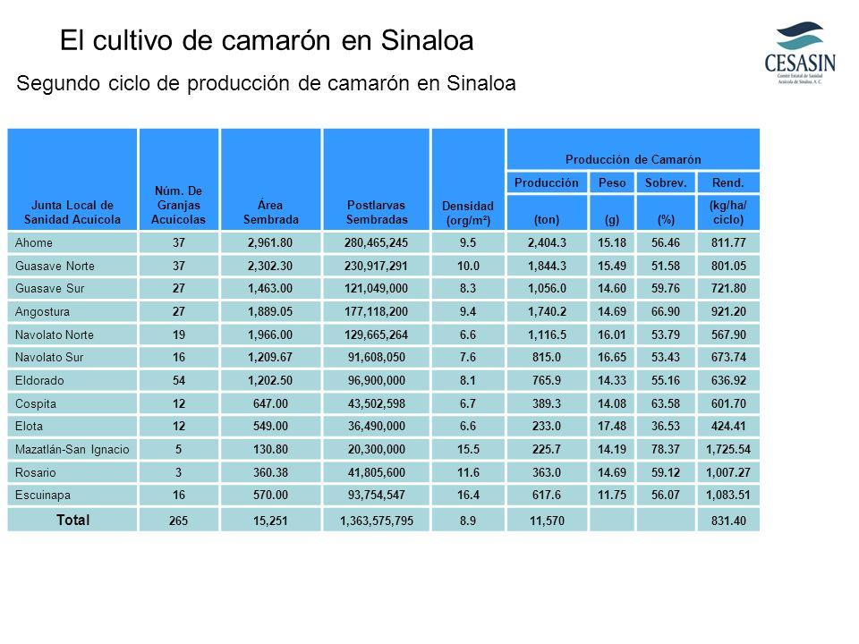 Determinación de la ración alimenticia del peso vivo del camarón en estanques de engorde a una densidad de 6.5-9.0 juveniles/m2.