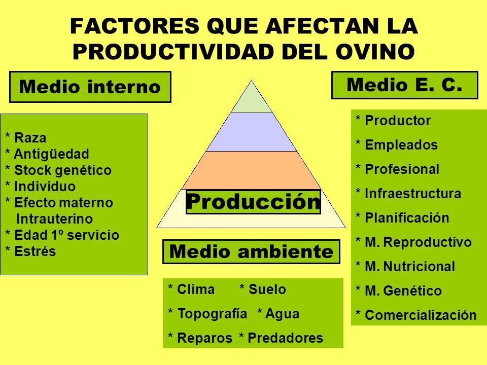 FACTORES QUE AFECTAN LA PRODUCTIVIDAD DEL OVINO Producción Medio interno Medio E. C. Medio ambiente * Raza * Antigüedad * Stock genético * Individuo *