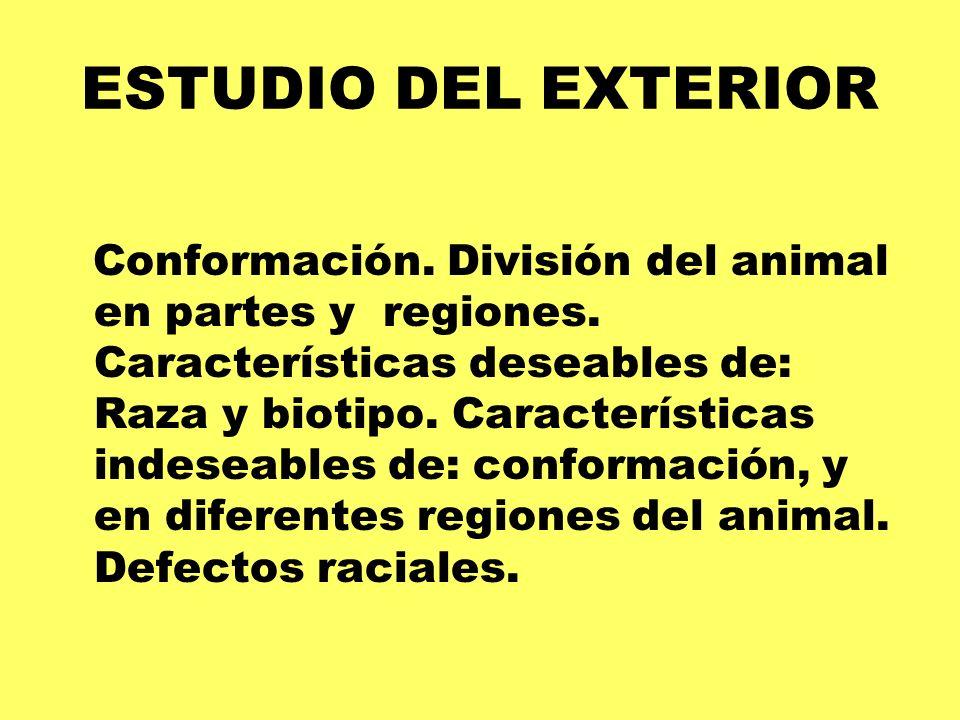 ESTUDIO DEL EXTERIOR Conformación. División del animal en partes y regiones. Características deseables de: Raza y biotipo. Características indeseables