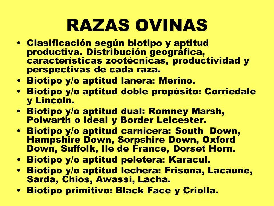 RAZAS OVINAS Clasificación según biotipo y aptitud productiva. Distribución geográfica, características zootécnicas, productividad y perspectivas de c