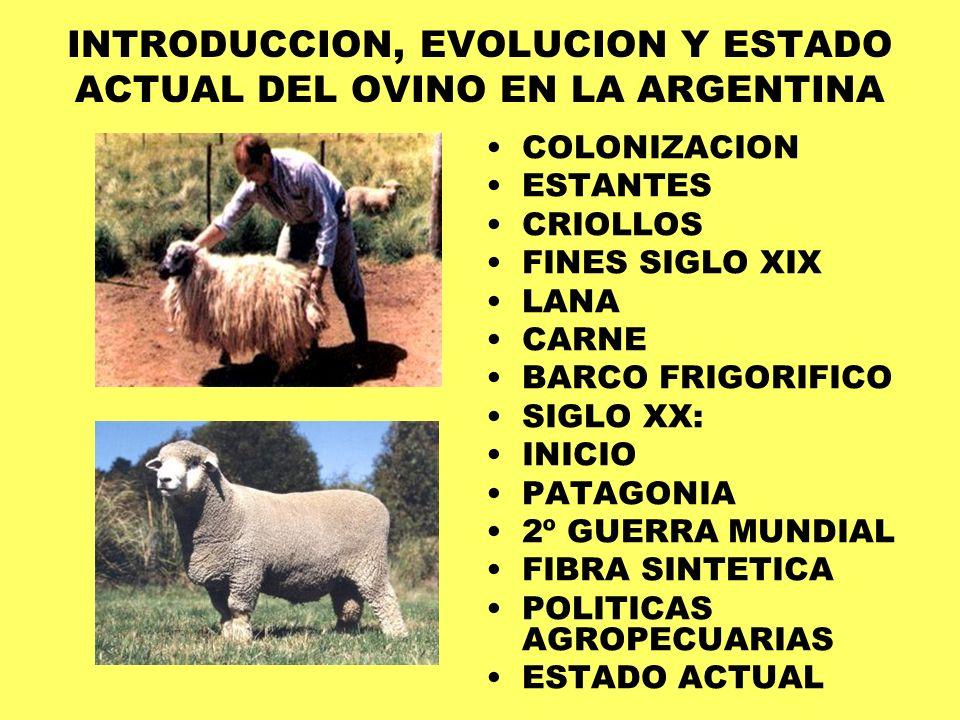 INTRODUCCION, EVOLUCION Y ESTADO ACTUAL DEL OVINO EN LA ARGENTINA COLONIZACION ESTANTES CRIOLLOS FINES SIGLO XIX LANA CARNE BARCO FRIGORIFICO SIGLO XX