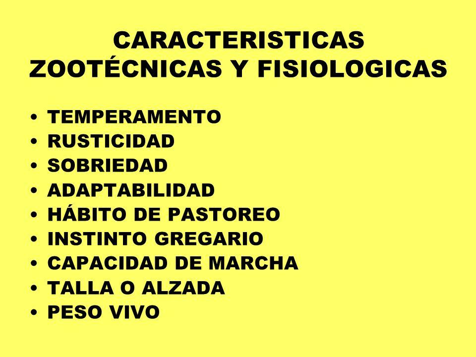 CARACTERISTICAS ZOOTÉCNICAS Y FISIOLOGICAS TEMPERAMENTO RUSTICIDAD SOBRIEDAD ADAPTABILIDAD HÁBITO DE PASTOREO INSTINTO GREGARIO CAPACIDAD DE MARCHA TA