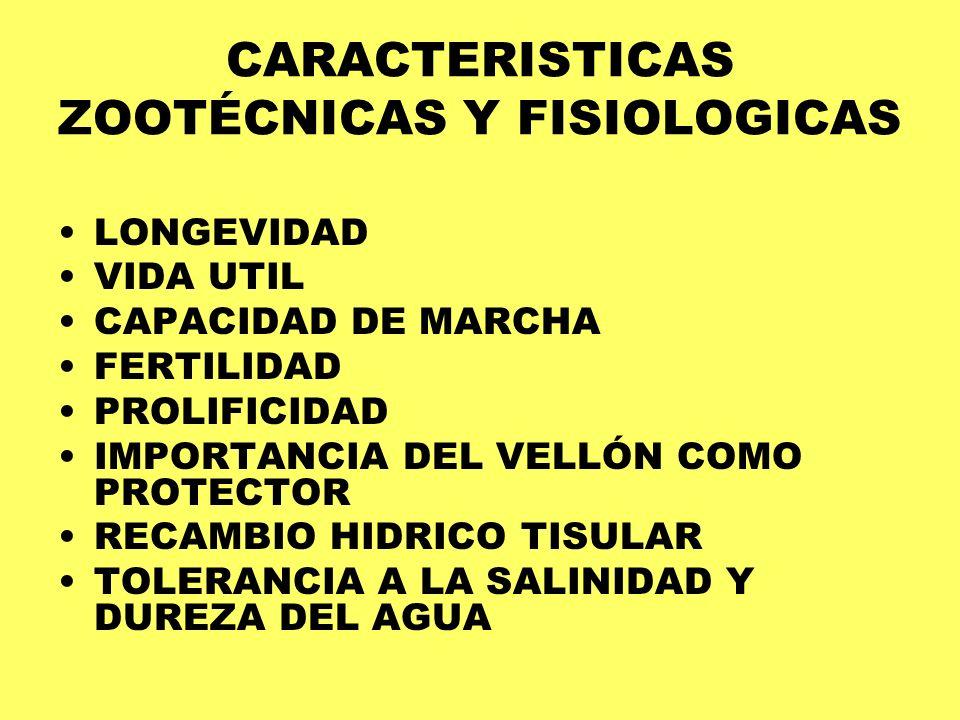 CARACTERISTICAS ZOOTÉCNICAS Y FISIOLOGICAS LONGEVIDAD VIDA UTIL CAPACIDAD DE MARCHA FERTILIDAD PROLIFICIDAD IMPORTANCIA DEL VELLÓN COMO PROTECTOR RECA