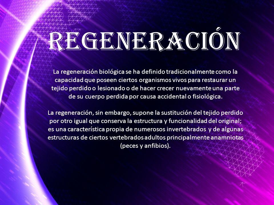 Regeneración La regeneración biológica se ha definido tradicionalmente como la capacidad que poseen ciertos organismos vivos para restaurar un tejido