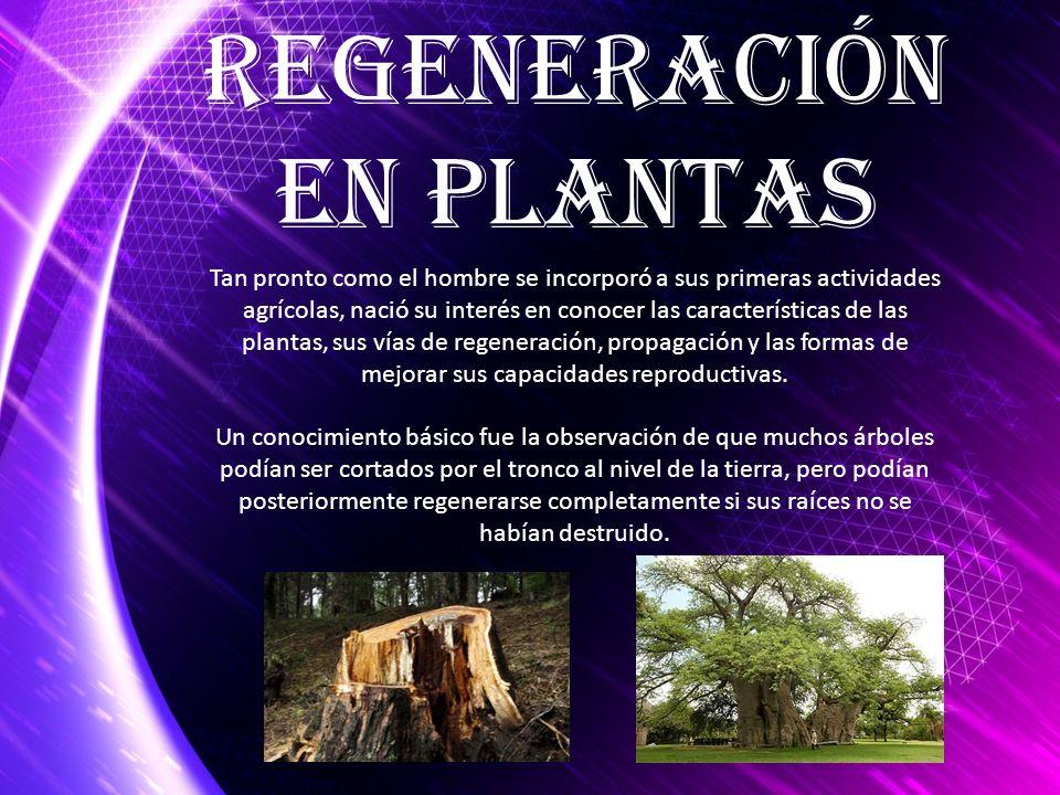 Regeneración en Plantas Tan pronto como el hombre se incorporó a sus primeras actividades agrícolas, nació su interés en conocer las características d