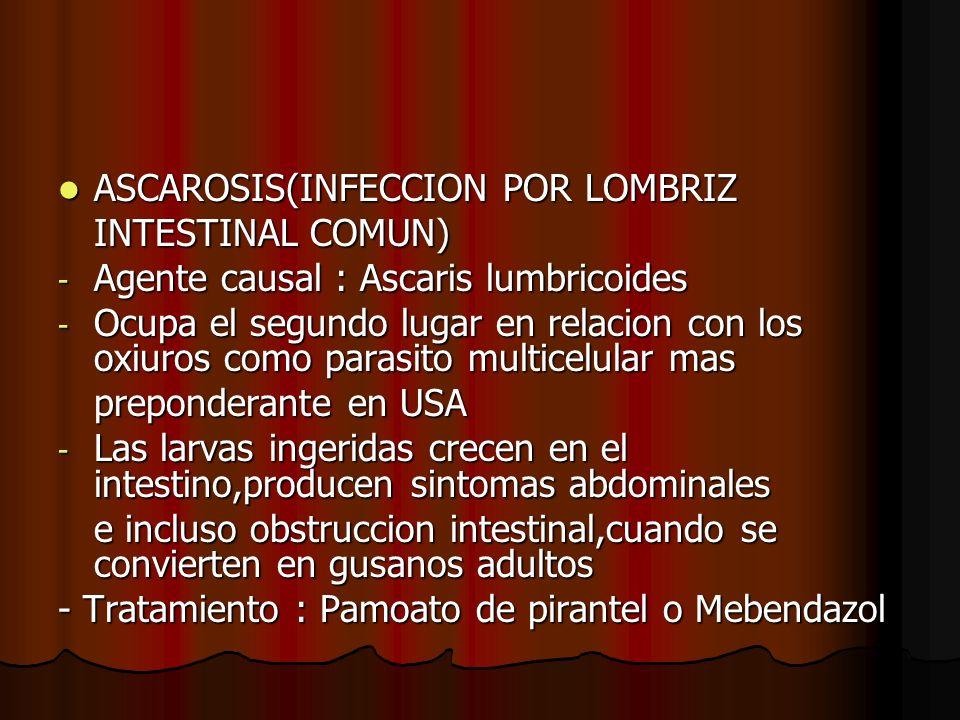 ASCAROSIS(INFECCION POR LOMBRIZ ASCAROSIS(INFECCION POR LOMBRIZ INTESTINAL COMUN) - Agente causal : Ascaris lumbricoides - Ocupa el segundo lugar en relacion con los oxiuros como parasito multicelular mas preponderante en USA - Las larvas ingeridas crecen en el intestino,producen sintomas abdominales e incluso obstruccion intestinal,cuando se convierten en gusanos adultos - Tratamiento : Pamoato de pirantel o Mebendazol