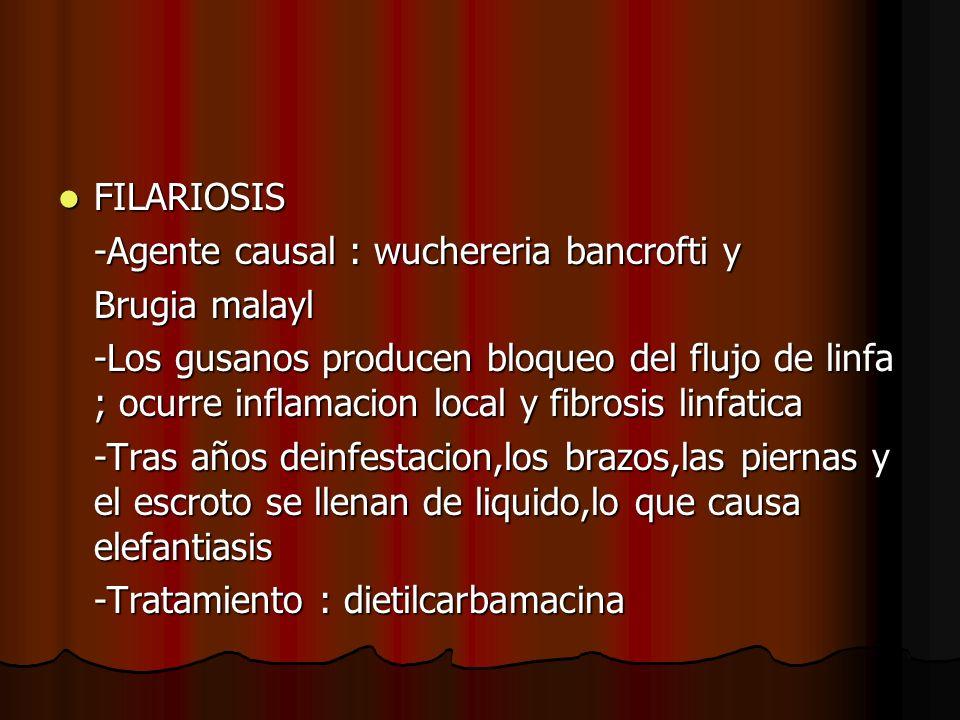 FILARIOSIS FILARIOSIS -Agente causal : wuchereria bancrofti y Brugia malayl -Los gusanos producen bloqueo del flujo de linfa ; ocurre inflamacion loca