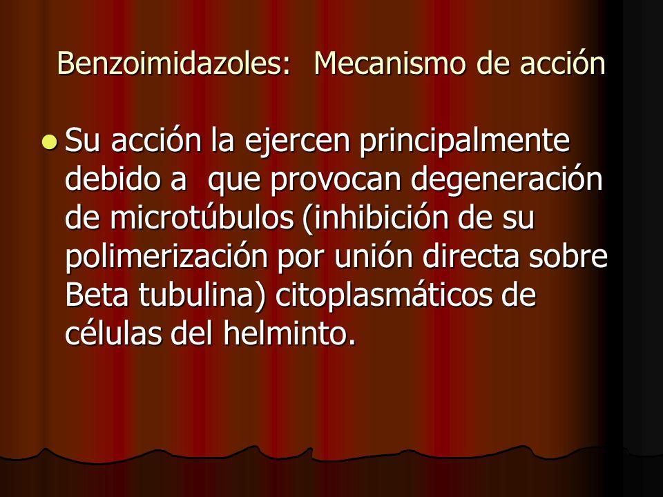 Benzoimidazoles: Mecanismo de acción Su acción la ejercen principalmente debido a que provocan degeneración de microtúbulos (inhibición de su polimeri