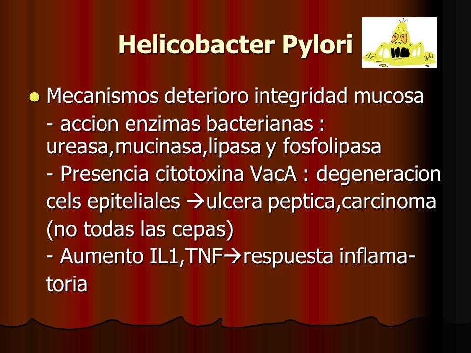 Helicobacter Pylori Mecanismos deterioro integridad mucosa Mecanismos deterioro integridad mucosa - accion enzimas bacterianas : ureasa,mucinasa,lipasa y fosfolipasa - Presencia citotoxina VacA : degeneracion cels epiteliales ulcera peptica,carcinoma (no todas las cepas) - Aumento IL1,TNF respuesta inflama- toria