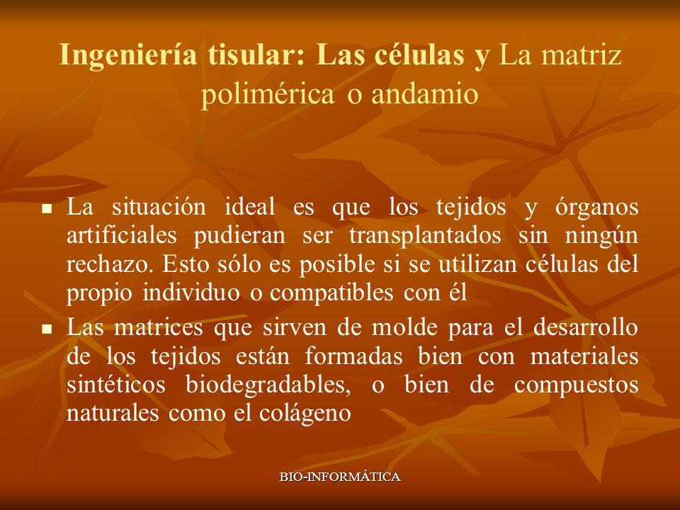 BIO-INFORMÁTICA Ingeniería tisular: Las células y La matriz polimérica o andamio La situación ideal es que los tejidos y órganos artificiales pudieran
