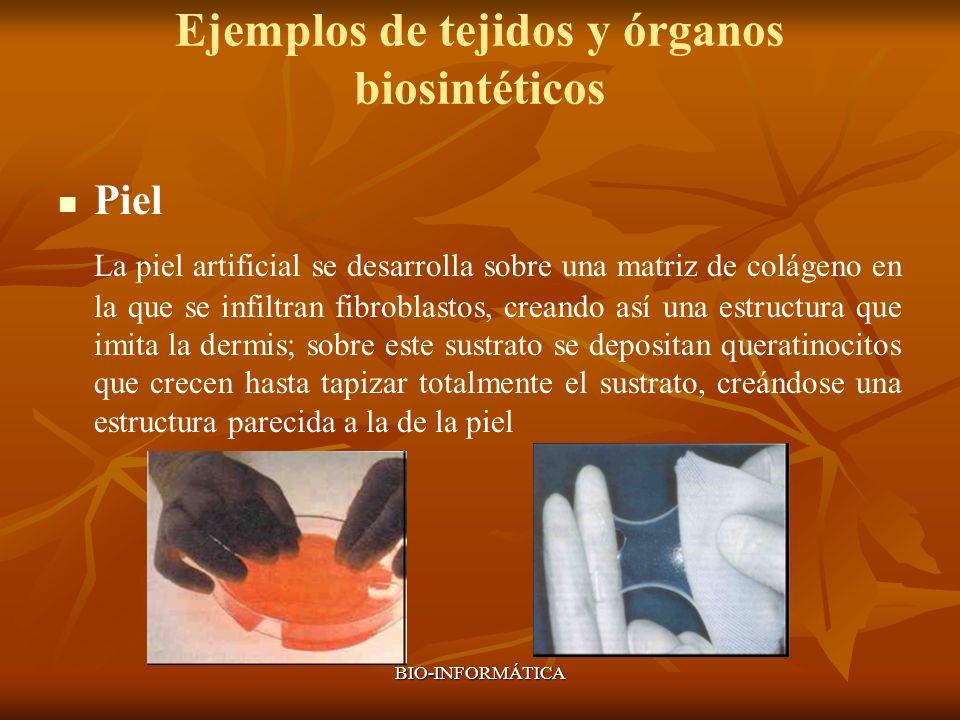 BIO-INFORMÁTICA Ejemplos de tejidos y órganos biosintéticos Piel La piel artificial se desarrolla sobre una matriz de colágeno en la que se infiltran