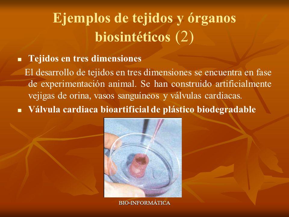 BIO-INFORMÁTICA Ejemplos de tejidos y órganos biosintéticos (2) Tejidos en tres dimensiones El desarrollo de tejidos en tres dimensiones se encuentra