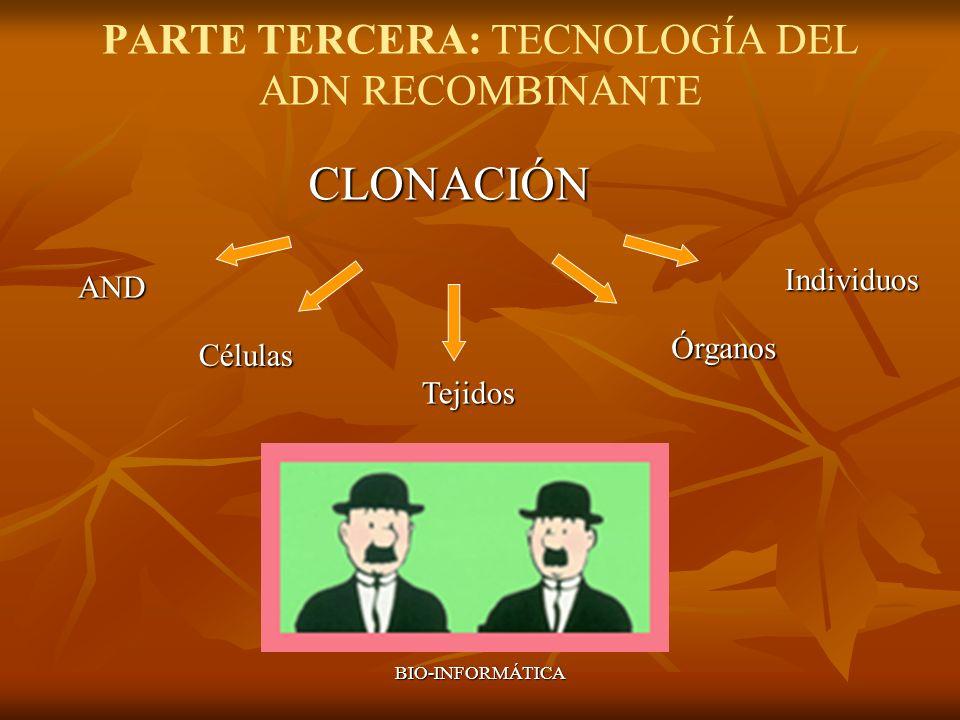 BIO-INFORMÁTICA PARTE TERCERA: TECNOLOGÍA DEL ADN RECOMBINANTE CLONACIÓN Individuos Órganos Tejidos Células AND