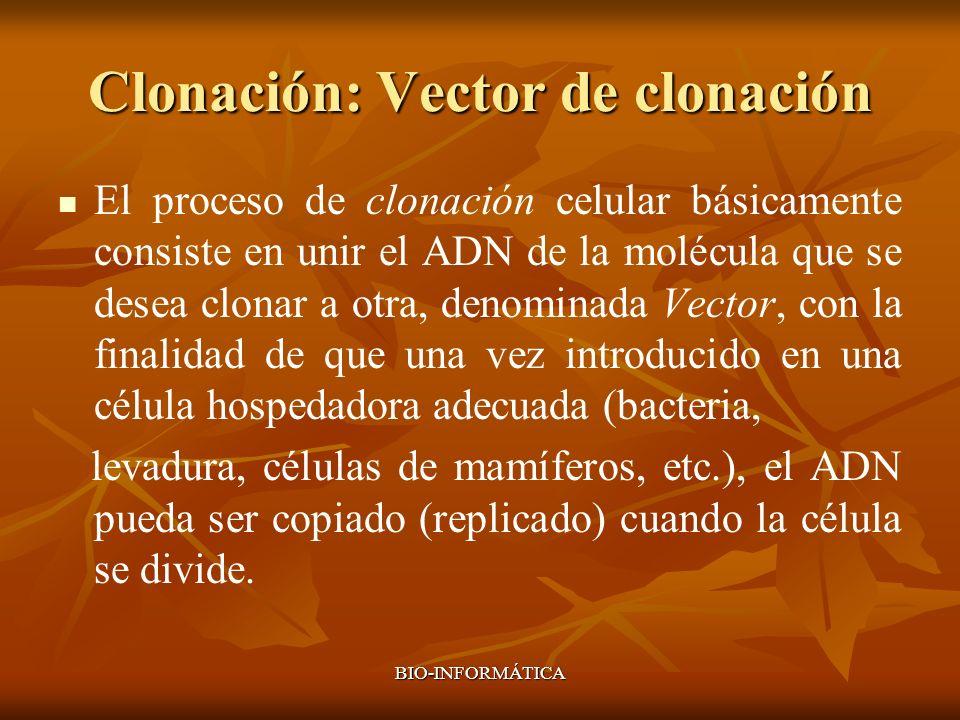 BIO-INFORMÁTICA Clonación: Vector de clonación El proceso de clonación celular básicamente consiste en unir el ADN de la molécula que se desea clonar