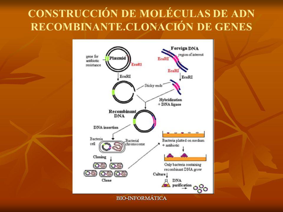 BIO-INFORMÁTICA CONSTRUCCIÓN DE MOLÉCULAS DE ADN RECOMBINANTE.CLONACIÓN DE GENES