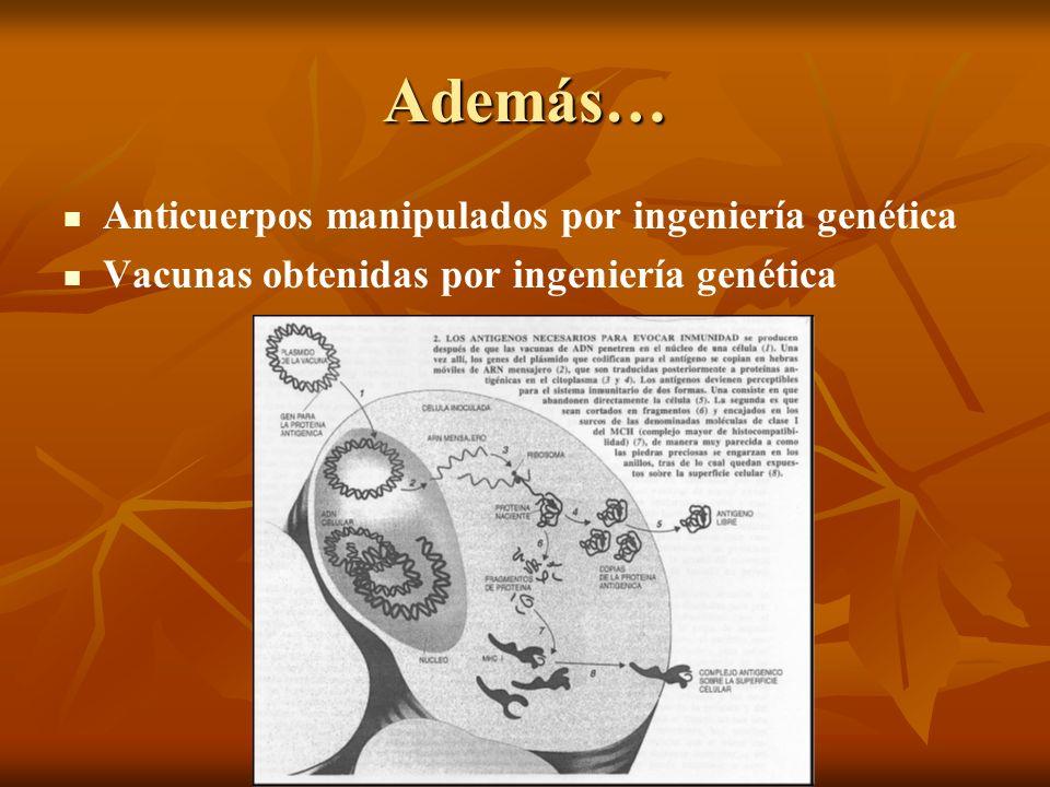 BIO-INFORMÁTICA Además… Anticuerpos manipulados por ingeniería genética Vacunas obtenidas por ingeniería genética