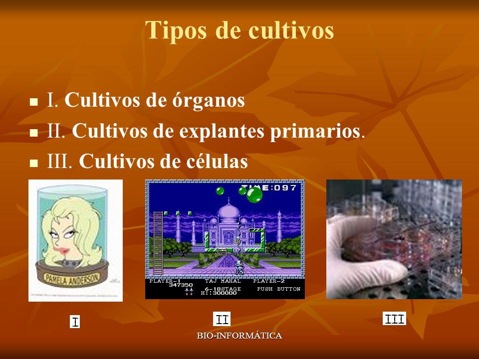 BIO-INFORMÁTICA Tipos de cultivos I. Cultivos de órganos II. Cultivos de explantes primarios. III. Cultivos de células