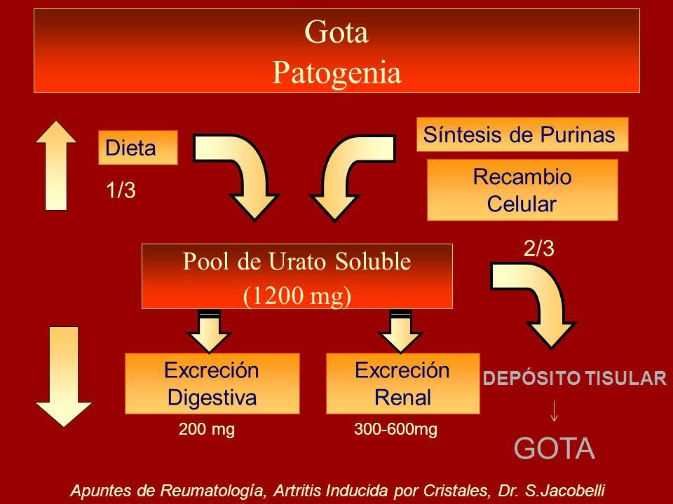 Gota Patogenia Pool de Urato Soluble (1200 mg) Dieta Síntesis de Purinas Recambio Celular 1/3 2/3 Excreción Digestiva Excreción Renal 200 mg300-600mg
