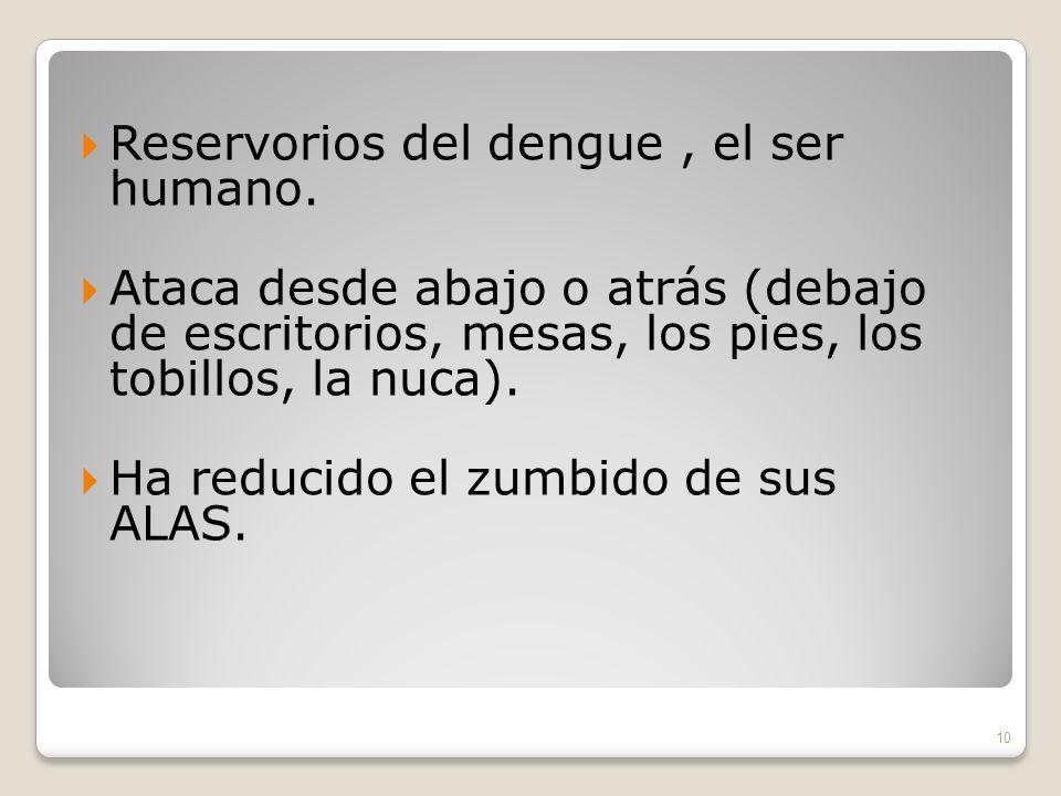 Reservorios del dengue, el ser humano.