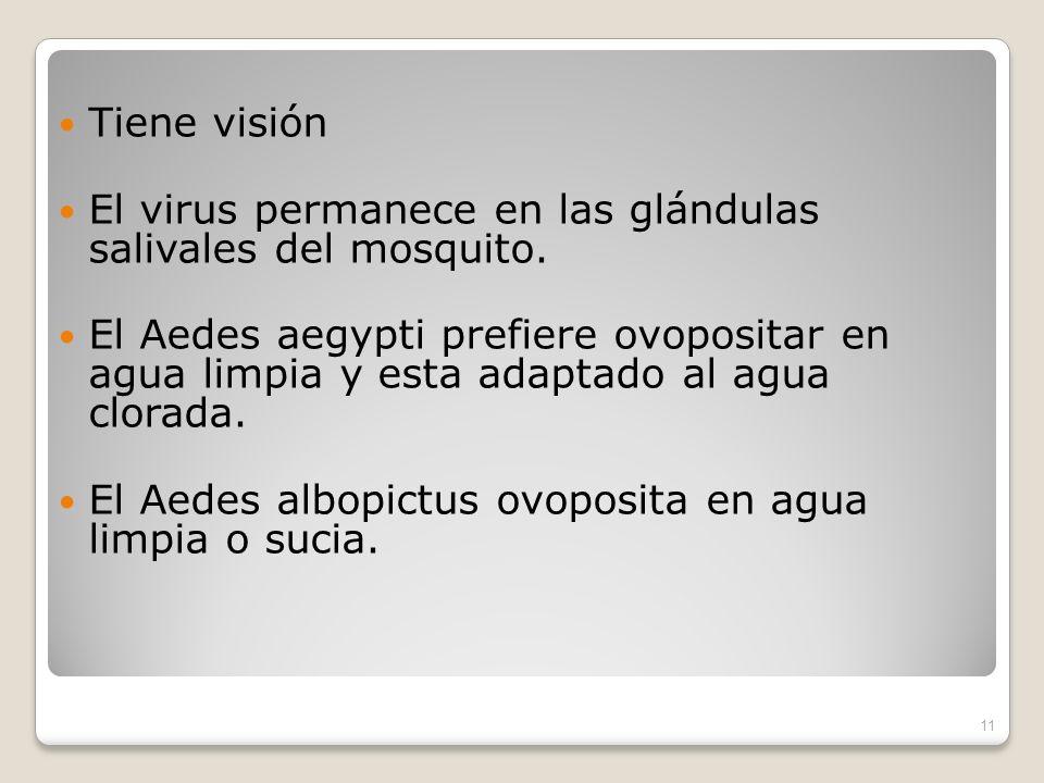 Tiene visión El virus permanece en las glándulas salivales del mosquito.