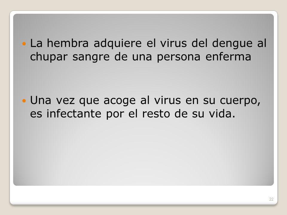 La hembra adquiere el virus del dengue al chupar sangre de una persona enferma Una vez que acoge al virus en su cuerpo, es infectante por el resto de su vida.